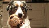 Nunnu GALERII: Igaühe jaoks on kuskil keegi! 21 looma ja nende lemmikmänguasjad teevad südame soojaks