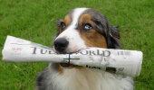 PÄEVA ANEKDOOT: Kui koer tunneb häid kombeid