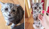 SAA TUTTAVAKS: See on Luhu, maailma kõige kurvem kass!