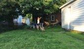 VIDEO | Koera katse lendavat taldrikut püüda läheb luhta