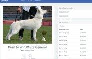 Eestlased lõid lemmikloomade Facebooki ehk PetID