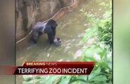 ВИДЕО: В зоопарке США застрелили гориллу с ребенком на руках