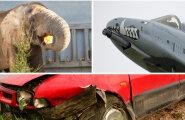 ГЛАВНОЕ ЗА ДЕНЬ: Шутка о бомбе в аэропорту, множество ДТП и закулисье зоопарка