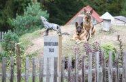 Hundisilma koerad