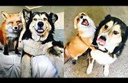 ВИДЕО: Пять необычных случаев дружбы животных