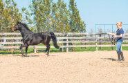 Kui kulukas on hobusepidamine?