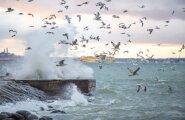 Синоптики предупреждают о сильном шторме на островах