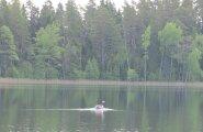 Elektrimootoritega varustatud Pladypus liigub järve pinnal vaikselt, mis võimaldab teha täpseid akustilisi ja optilisi fotosid.