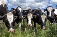 PRIA toetatud piimatootja vandus kahjumile alla