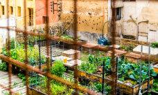 Vaata, kuidas aiandus annab hüljatud suurlinnale uue võimaluse