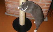 TEEME ISE: Kratsimispuu kassi meeleheaks