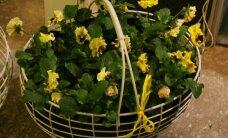 Uudiseid Soome aiamessilt: põnevad sibullilled, nutikas kartulipott