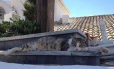 PÄEVAPILT: Vaat need kassid juba oskavad siestat pidada!