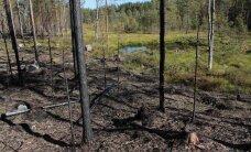 Puidujussid rõõmustavad: mets põleb!