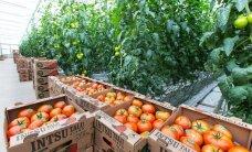 Vähelevinud kultuuride taimekaitse muutub lihtsamaks