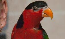 Нарвитянка незаконно провезла через эстонско-российскую границу попугая