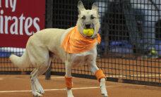 VIDEO: Brasiilia tennisevõistlusel kasutati pallipoistena koeri
