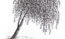 Talvine unistus: juudapuulehikust kardin vesiroositiigi kaldal