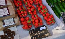DELFI VIDEO ja FOTOD TÜRI LILLELAADALT: Eesti maasika kilogramm maksab 16 eurot