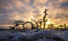 LUGEJA FOTOD: Talve võlumaa ootab avastajaid! Imelised pildid kargest talvehommikust