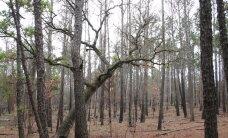 Üllatus teadlastele: puid aina langetatakse, aga taimi on maailmas rohkem kui enne