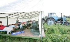 Eesti maasikakorjajate video levib üle maailma, autoritest pole kuulnud keegi
