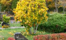 Praktilised nõuanded: kuidas kujundada hauaplatsi?