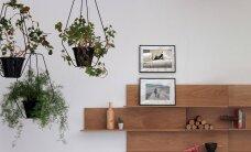 FOTOD: 10 lahedat moodust, kuidas ruumis taimi esitleda