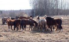 Kaitsevägi ei näe hobustele rakendust