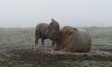 Ilm tuleb tavapärasest külmem ja kuivem