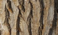 Dendropäev botaanikaaias   Millised on põõsad ja puud pärast lehtede langemist?