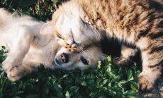 Koerad vs kassid: Kas sa oskad arvata, kumb lemmik maailma eri paikades populaarsem on?