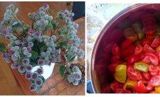 AIAHOOLIK │ Aiast saab tomatimoosi ja vaasi võib panna takjad