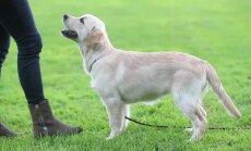VIDEO: Kutsika koolitamise alustalad. Kuidas õpetada koerale kodus kerge vaevaga selgeks lihtsad põhikäsud?