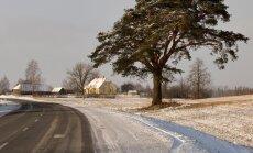 Tähenduslik männipuu, mis jäi mõned aastad enne majaostu Kristiina kaamerasilma ette. Siis ei teadnud ta, et lisaks kaunile puule, on pildil ka nende pere tulevane kodu.