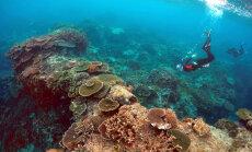 Las kliima soojeneb! Korallid võivad maailmamere taseme tõusu üle hoopis rõõmustada