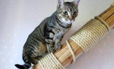 Vaata, millised lepingutingimused esitab päriskodu ootav kass Triiton oma tulevasele pererahvale