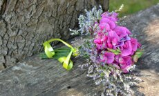 Vaata, milliseid lilleseemneid veel mais külvata võiks