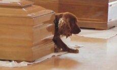 VÄGA KURB FOTO: Koer keeldus lahkumast Itaalia maavärinas hukkunud peremehe kirstu kõrvalt