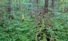 Leili metsalood: Ajast ja väärtustest
