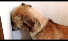 Südamlik päästeoperatsioon: Väärkoheldud koer seisab hirmust liikumatuna nurgas päevi, kuni toimub midagi imelist