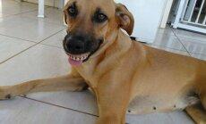 Naerutavad FOTOD: Koer leidis tagaaiast vanad proteesid ja põhjustas neid suhu proovides oma omanikule naerukrambid