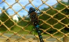 FOTO: Kabli linnujaama hooaja avas sügis-tondihobu