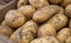 Raplamaa lapsed sulfiteeritud kartuleid enam ei söö