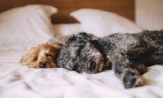 9 PÕHJUST: Kas lemmikloomaga voodi jagamine on hea idee?