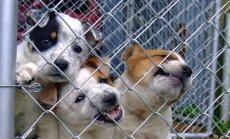 Loomapsühholoog selgitab: Mis põhjusel kükitavad õnnetult ühed koerad varjupaigas kauem kui teised?