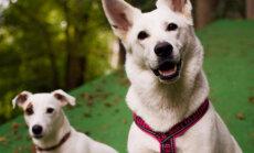 Viimsi seikluspargis töötavad Griffin ja Dingo oskavad tööd ja lõbu lahus hoida