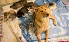 Kohus keelas Paljassaares lemmikloomade varjupaigas koerte majutamise