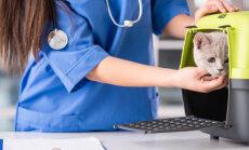 Kuidas arstivisiit võimalikult meeldivaks muuta? Sagedased vead, mida loomaomanikud kliinikus tegema kipuvad