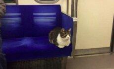 Tokyo metroos alati üksinda sõitev kass hämmastab kaasreisijaid